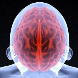 gluten effects on brain