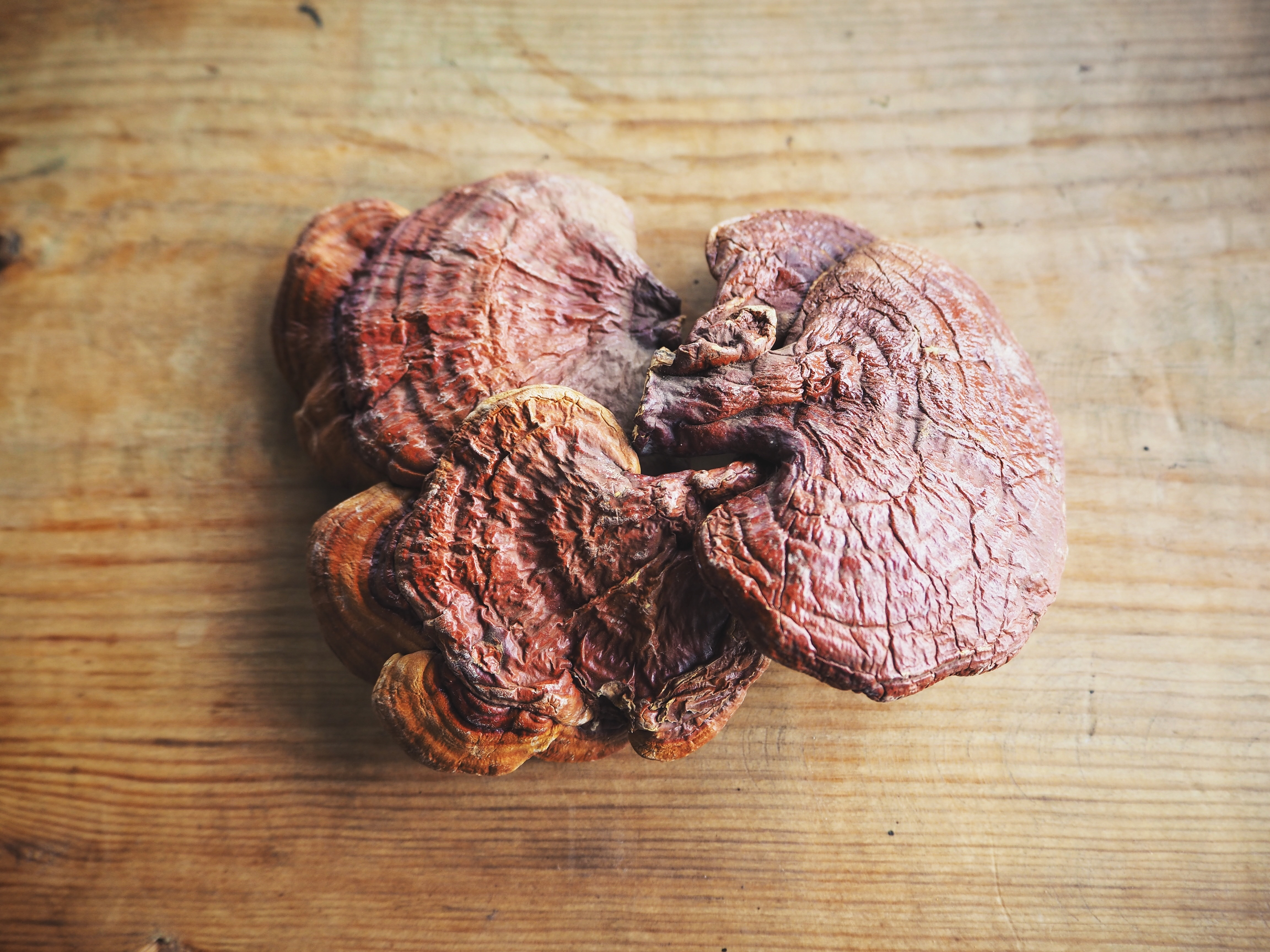 reishi mushroom.jpg