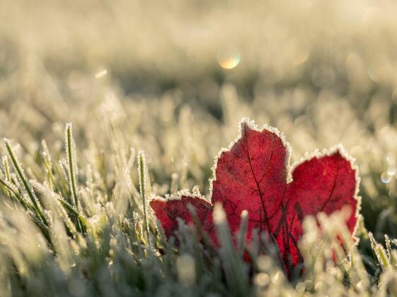 Autumn Winter Leaf-1