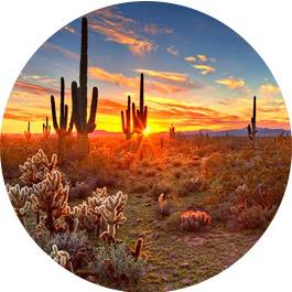 Phoenix-meeting