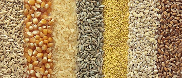 Many grains look very similar, and can be difficult to distinguish by eye.
