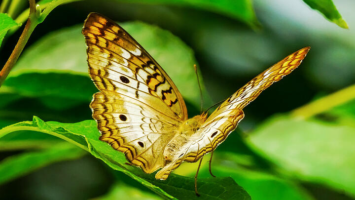 butterfly_thumb