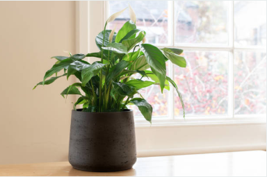 5 Best Low Maintenance Houseplants
