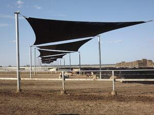 Advantages of Livestock Shade Shelters & Fabric Structures