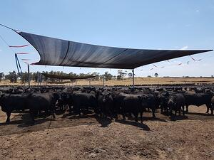 What is Livestock Heat Stress and the Impact of Shade Structures?