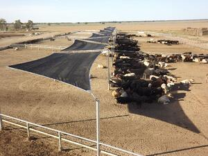 The Benefits of Livestock Shade Structures