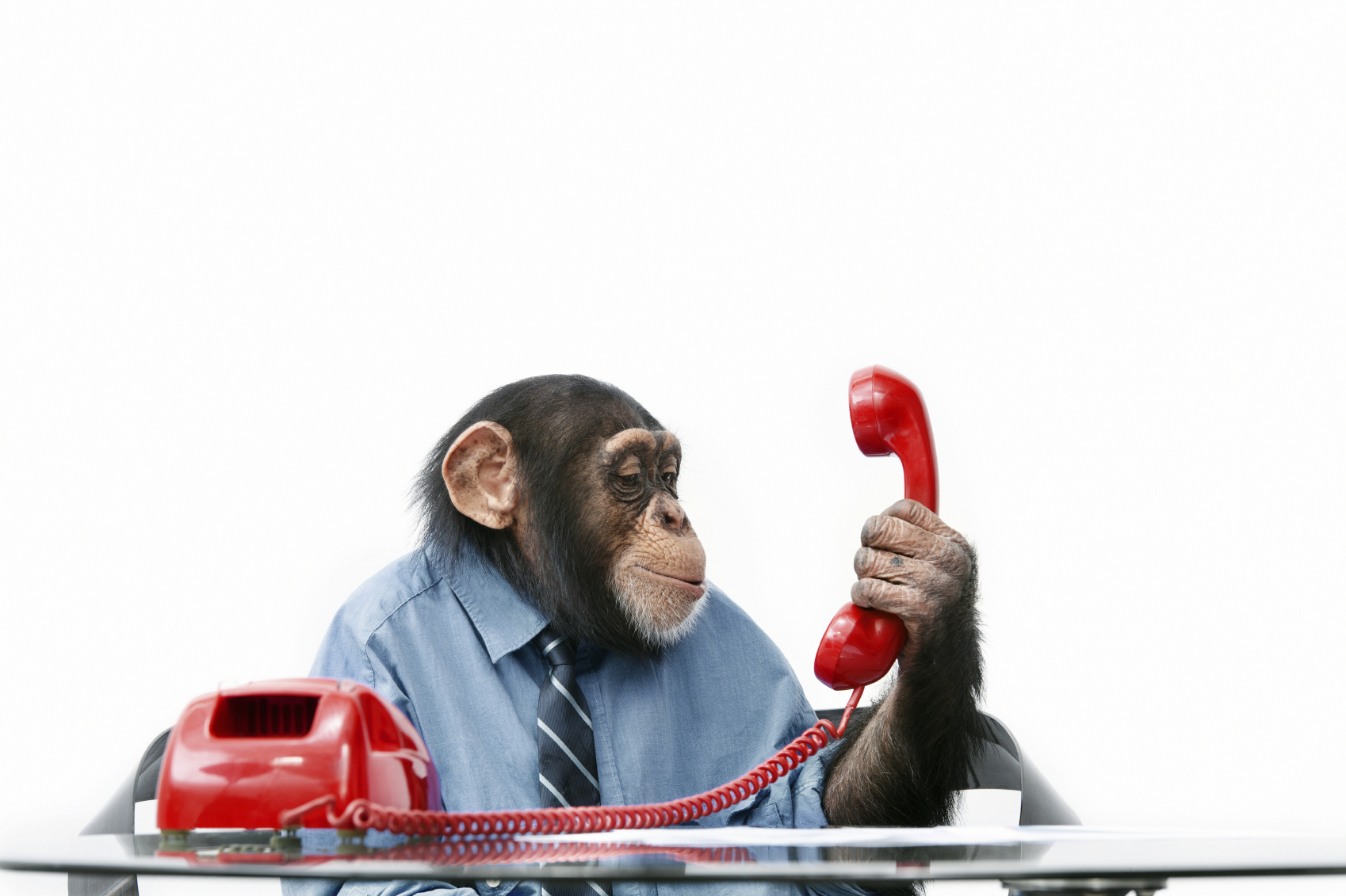 Monkey_customer_service