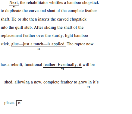sat and essay questions and reponsibilities