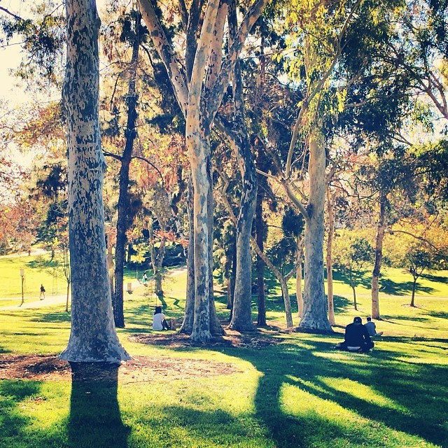 Ultimate Guide to the University of California Schools