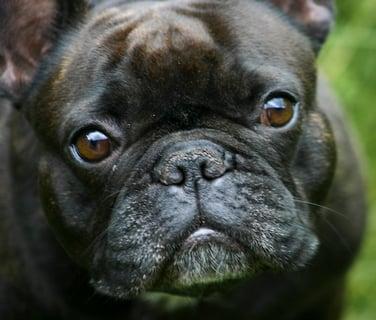 if i am a dog essay