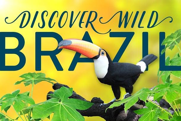 Discover-Wild-Brazil.jpg