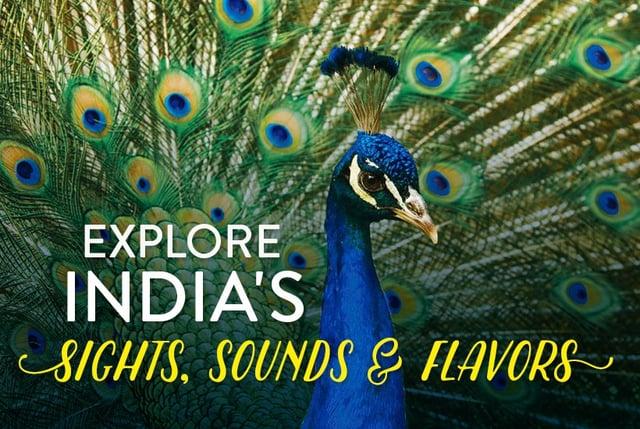 india-peacock.jpg