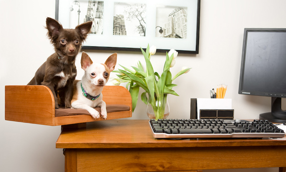 Dog and Cat Desk attachment