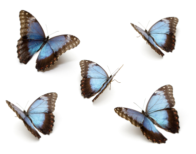 home-health-butterflies.jpg