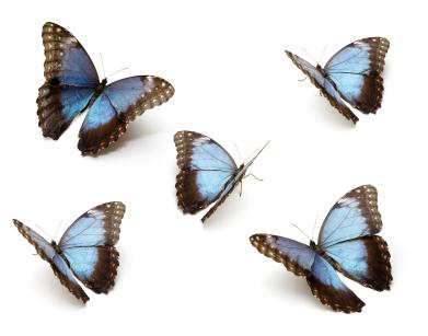 home-health-butterflies