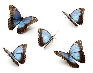 home-health-butterflies