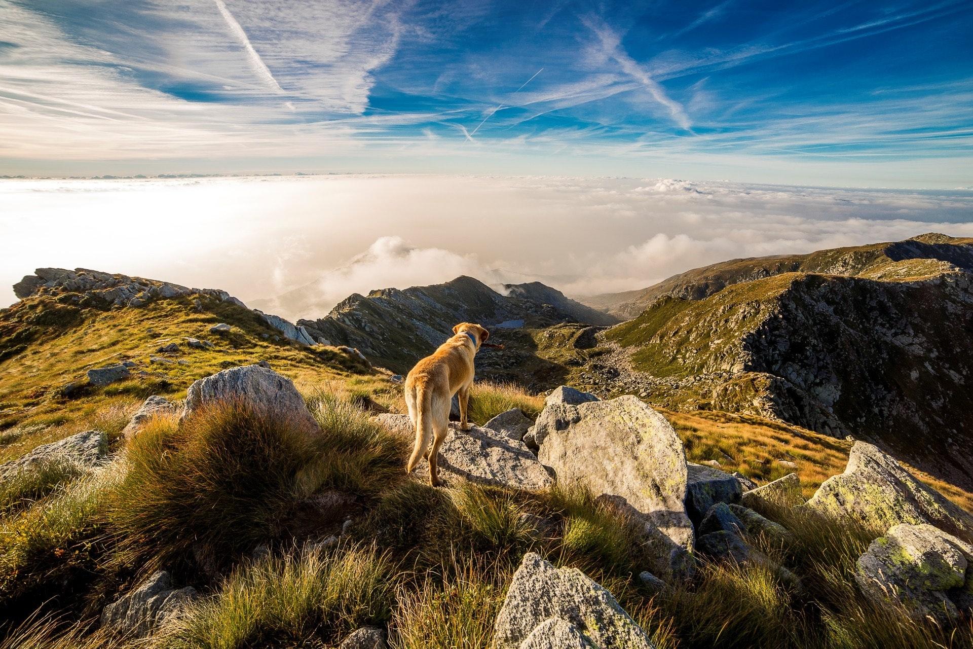 adventure-clouds-dog-65867