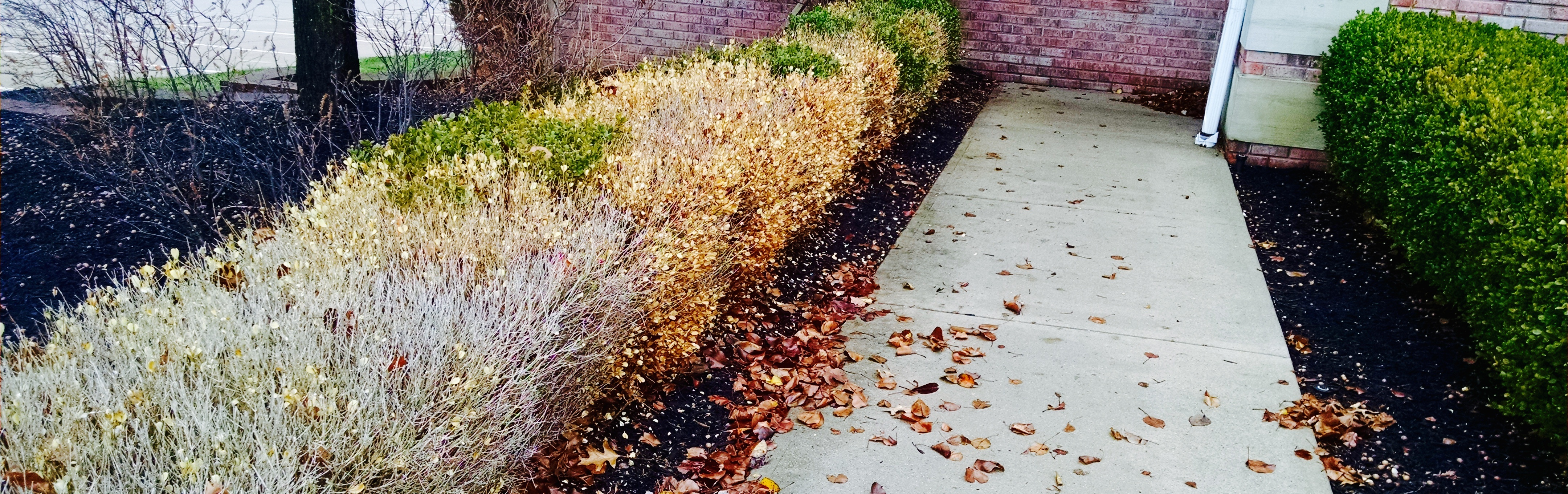 protect vulnerable shrubs from winter burn caused from freezing temperatures and wind