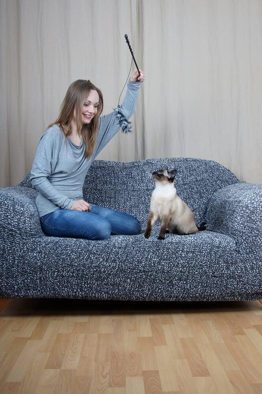 Kattenpension of kattenoppas?