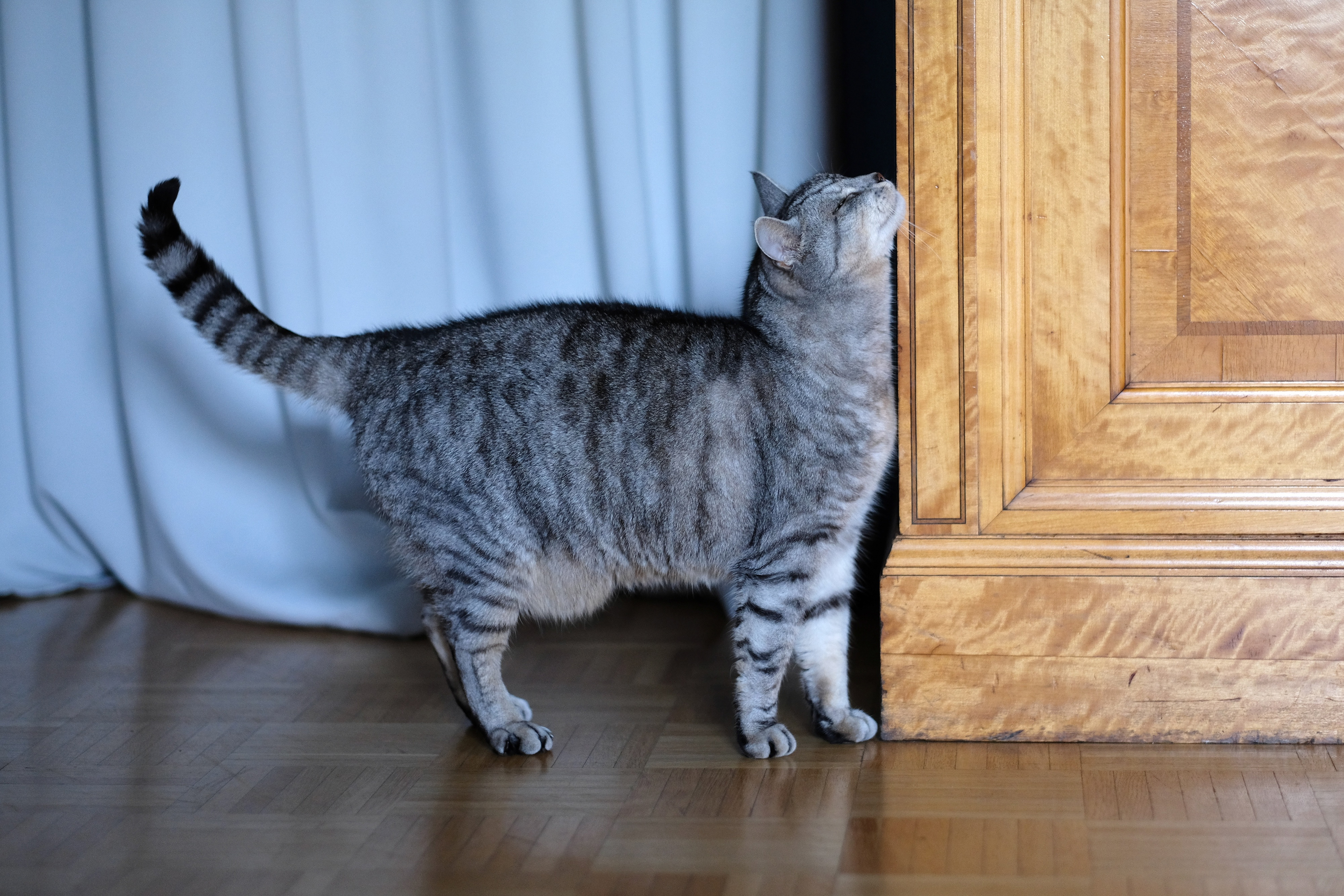 Expert+Q&A+What+to+expect+when+using+FELIWAY+march+editorial+03