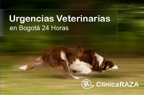 urgencias veterinarias 24 horas Bogotá
