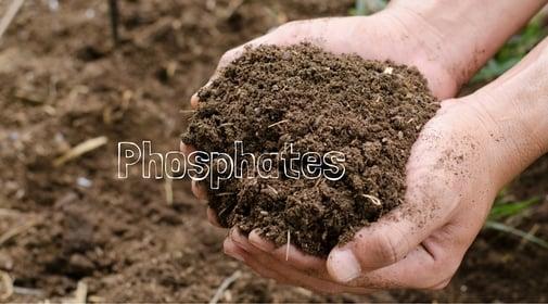 Phosphates in Pools