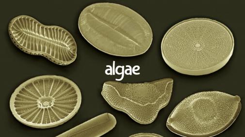 Understanding Algae