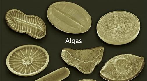 Comprendiendo las Algas