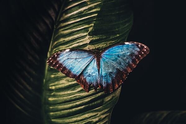 the-butterfly-effect