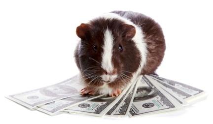 guinea-pigs-or-winners.jpg