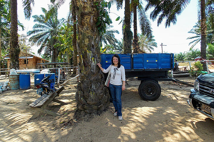 Detecting palm oil plantation land use in Myanmar