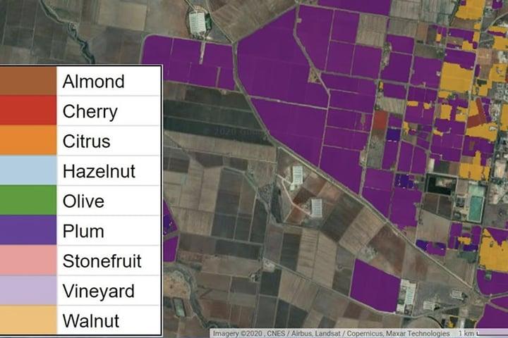 Perennial crop monitoring in the Riverina