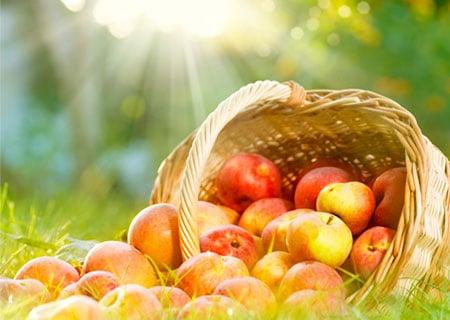 Hofmann Fruchtsäfte nutzt Branchenlösung INTEGRA®zur Optimierung der Supply Chain