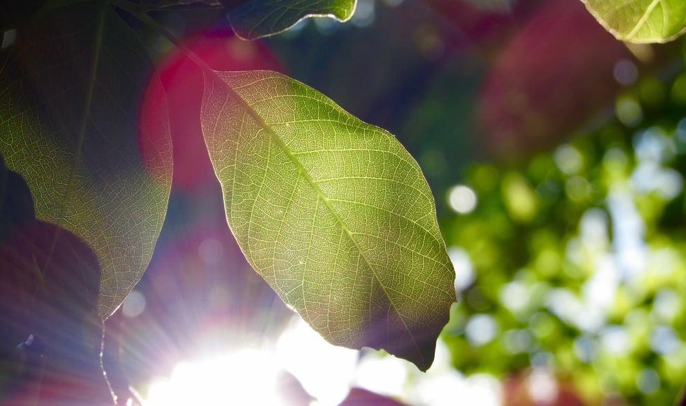 leaf-1209899_1920 (1)