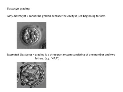 fifth-and-sixth-day-blastocyst-grading.jpeg