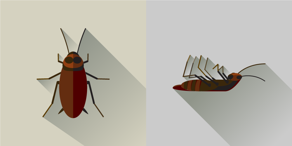 roach-illustration-1000x500.png