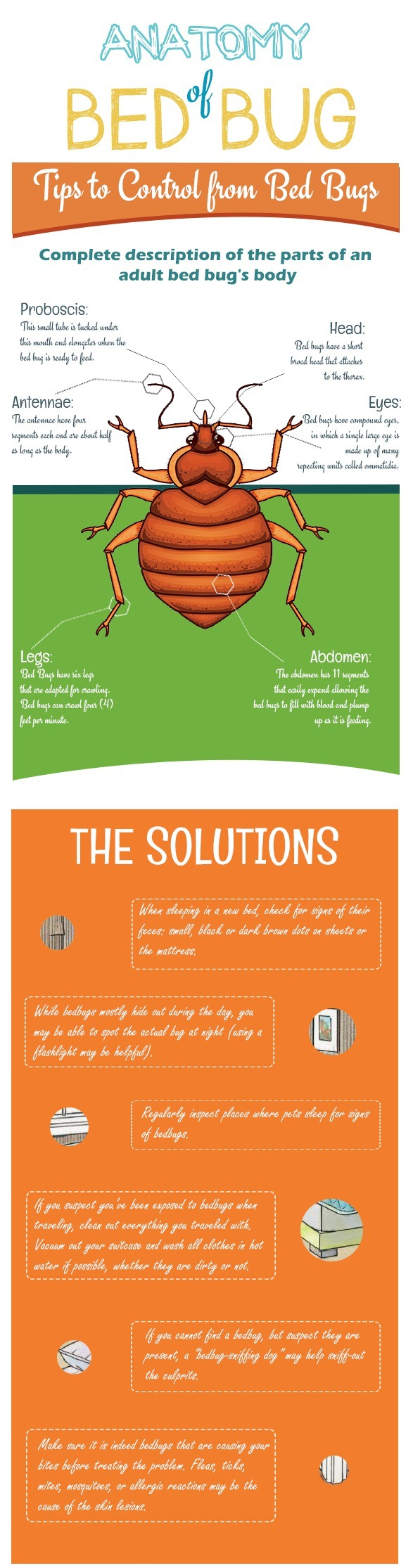 INFOGRAPHIC: Anatomy of a Bed Bug