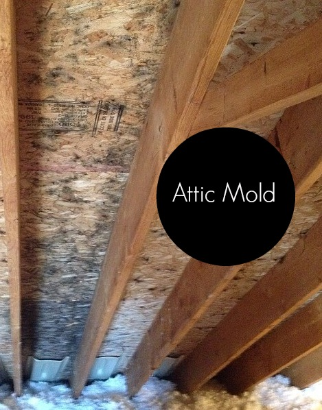4 Reasons Why Mold Grows In The Attic