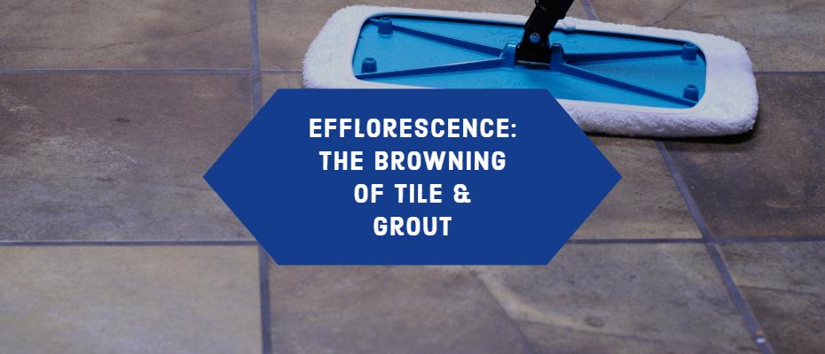 Efflorescence Blog
