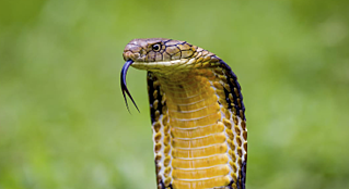 unintended-consequence-snake-danger