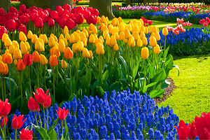 19KMMX_W_300x200_Flowers (002)