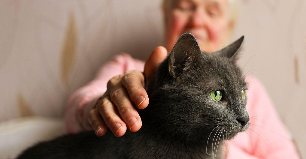 may-woman-cat-closeup