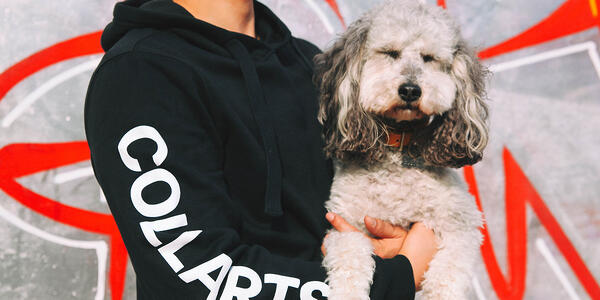 Boston-Dog