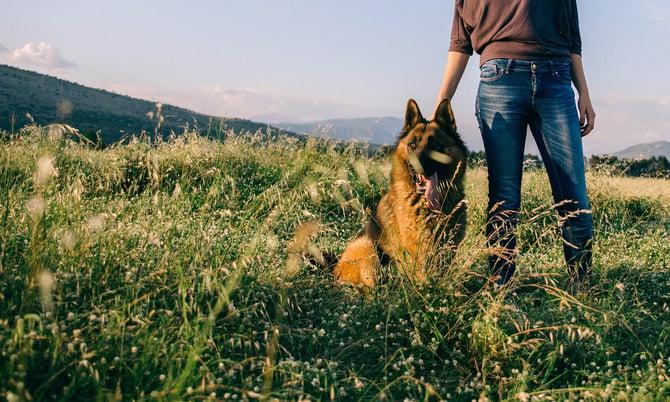 Dog Menta; Health Week (1 of 1)