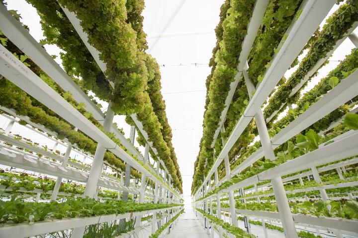 vertical_farm