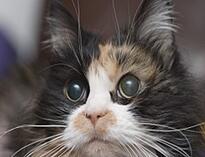 cat- feb murmur