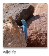 a lizard at Feynan lodge