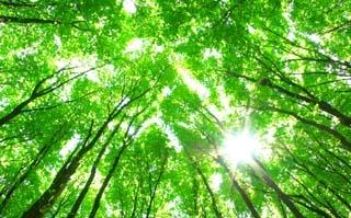 Den Wald vor lauter Bäumen nicht sehen: Machine Learning und die Fußball-Weltmeisterschaft