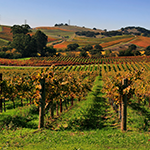 Vineyards_in_Napa_Valley_7_150