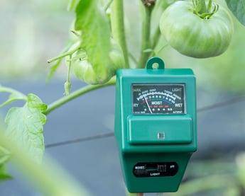 Dutch horticulture: regaining market leadership by using data